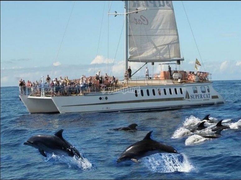从船上到鲸类群的存在