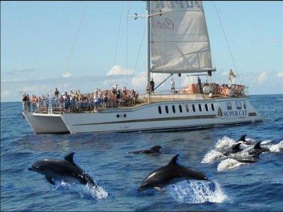 Ver cetáceos y comida en barco para niños en Magón