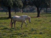 Un caballo en nuestra finca