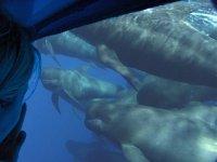 Calderones潜艇视觉