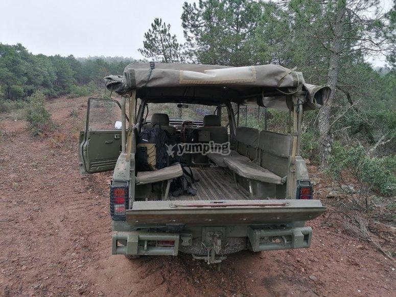 Comienza la aventura safari