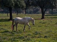 A horse in our farm