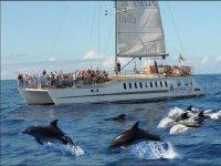 Avistar cetáceos y parasailing con aperitivo Mogán