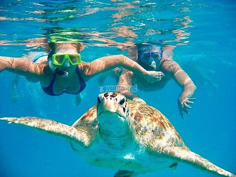 Practica snorkel entre tortugas