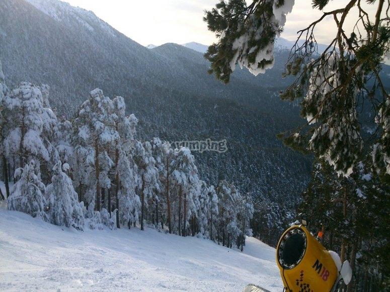 我们会在长廊上看到白色的风景,上面有霜冻的松树