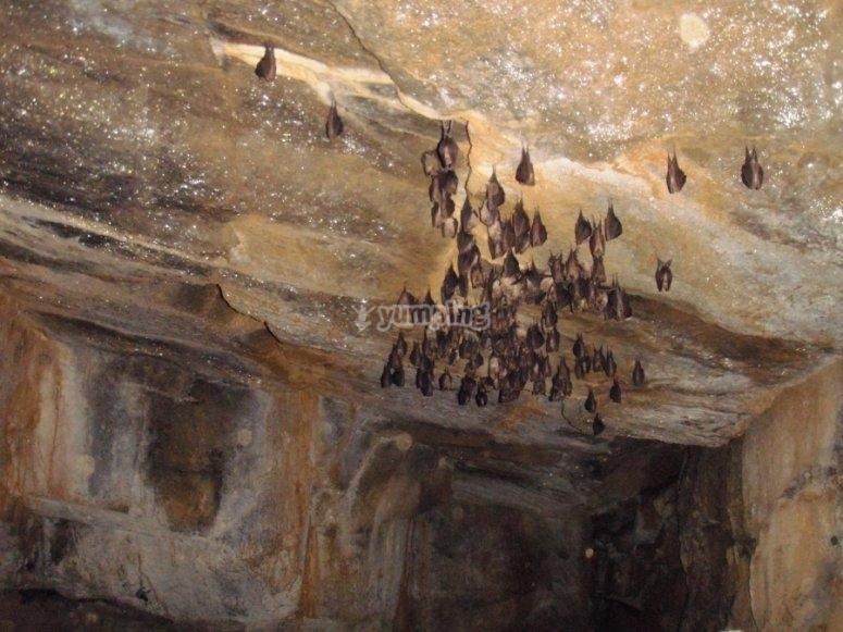 Caving in Berguedá