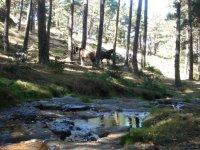 沿卡内西亚河的马匹