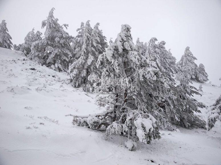植被被白雪覆盖的宽阔毯子覆盖