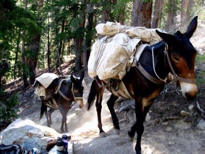 Ruta en mula por Sierra Madrona 4 horas