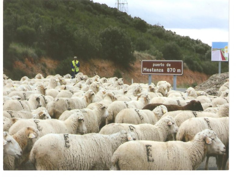 Live the transhumance for a day in Valle de Alcudia