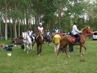 比赛马匹在马术训练营