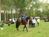 引水调水与马马术训练营