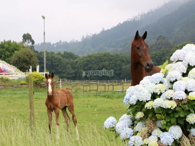 The horses of our center are tamed daily