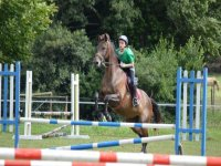 During the session you can practice horse jumping