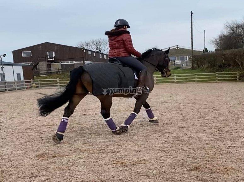 Orrius骑马课程