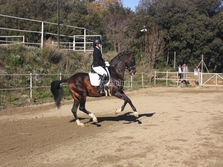 Orrius一周内的骑马课程
