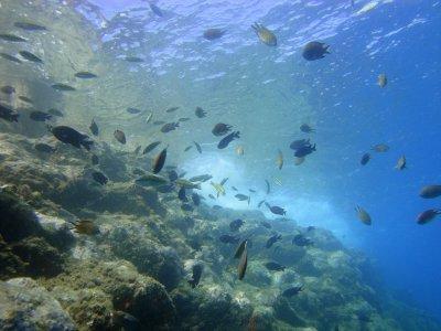 大加那利岛的浮潜课程3天