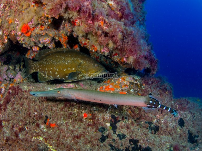 Diversidad marina