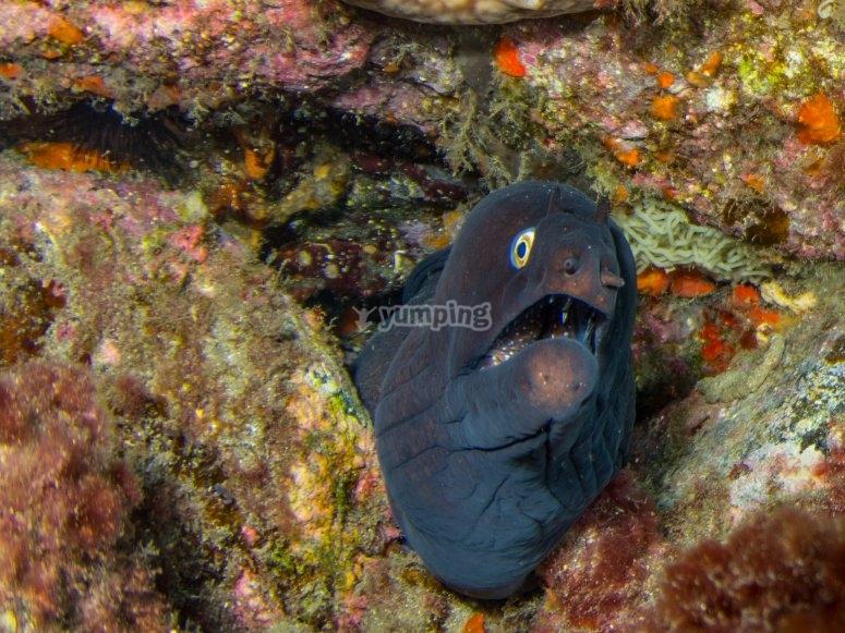 Entorno subacuático