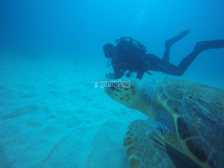 Buceando en profundidad con una tortuga