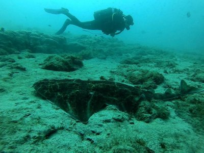 在大西洋博物馆潜水2小时30分钟