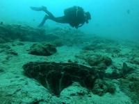 Encontrado angelote bajo el mar