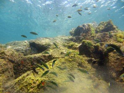 在普拉亚德拉斯坎特拉斯浮潜2小时