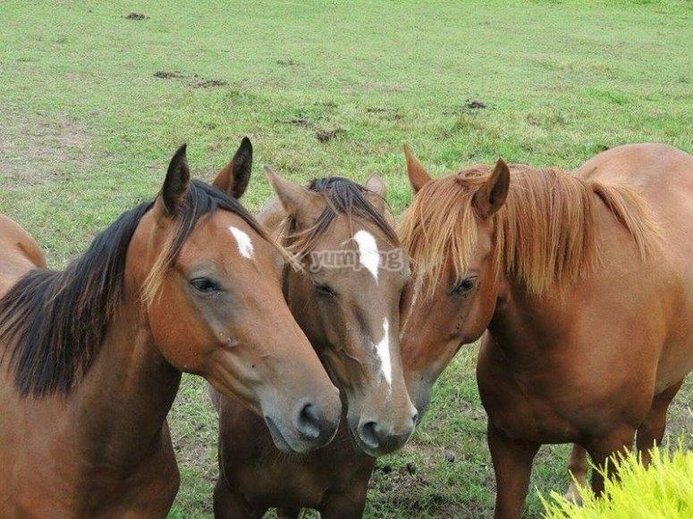 Los pequeños tendrán la oportunidad de iniciarse en el mundo del caballo
