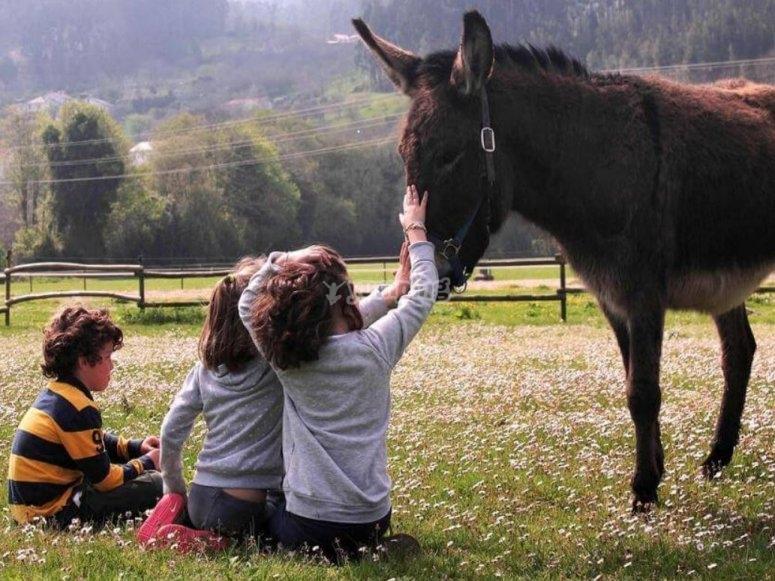 Todos los amigos podrán compartir el cariño por los ponis