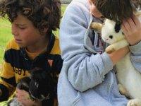 Tenemos diferentes razas de conejos que podrán conocer