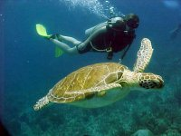 Navegando con tortugas