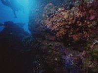 Disfruta del fondo del mar