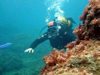 Buceador viendo formaciones marinas