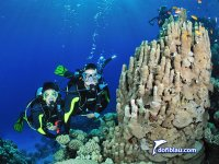 Divers along with Coral formation in the Red Sea
