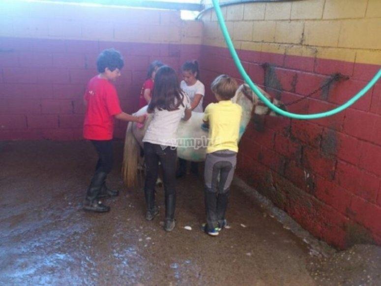 Los alumnos cuidando al equino