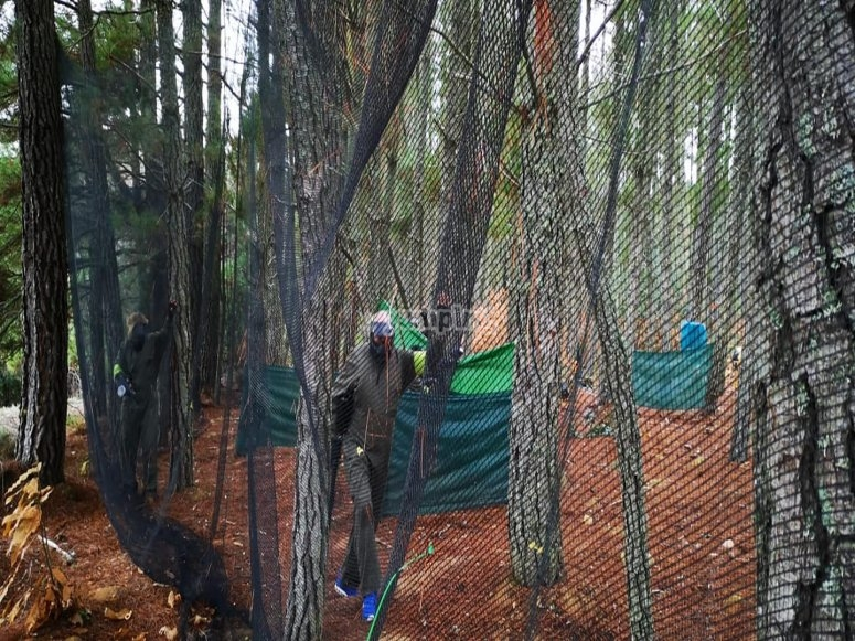 Trincheras en el bosque