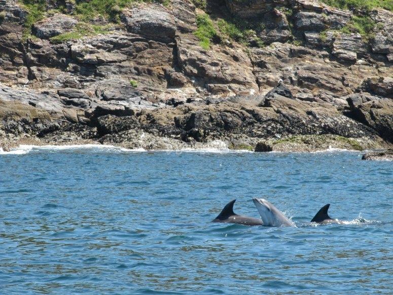 航线上的海豚
