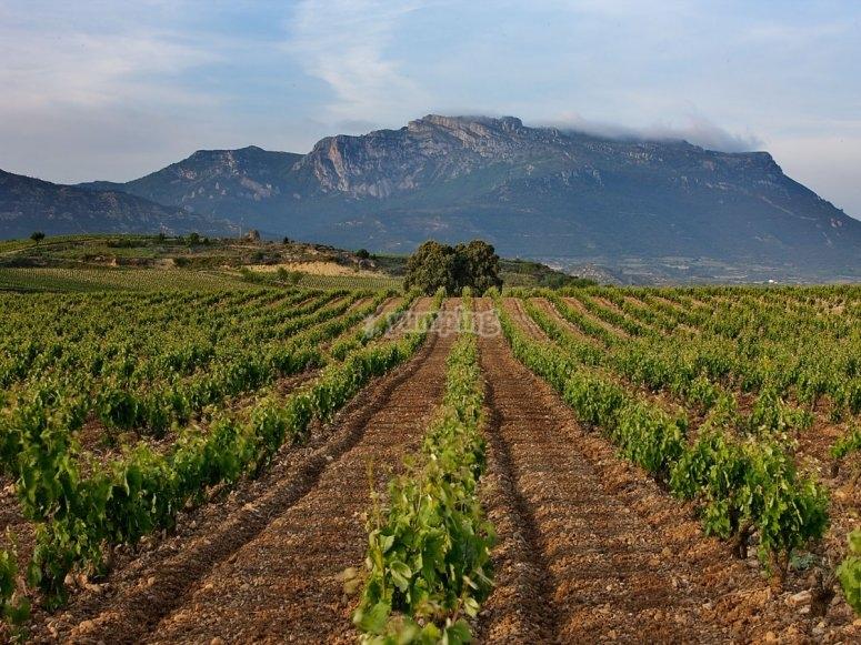 Vineyards in the Rías Baixas