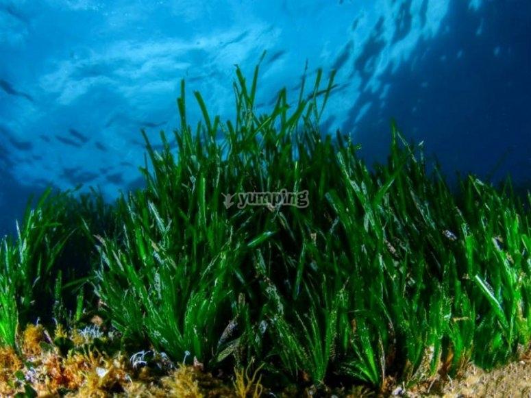 加泰罗尼亚海岸的植物群