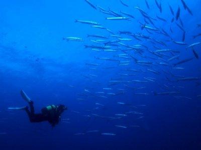 Bautizo de submarinismo en Tarragona 2 horas