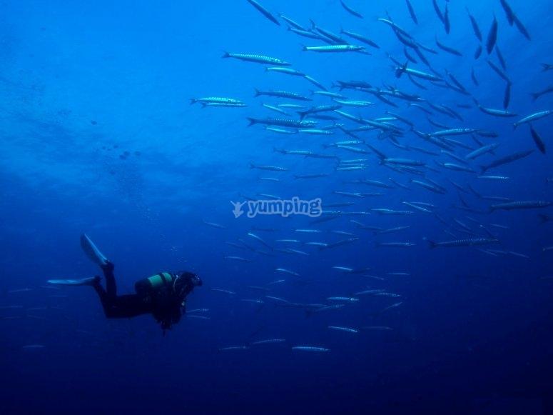 初学者潜水