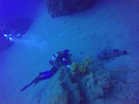 与海洋物种一起潜水
