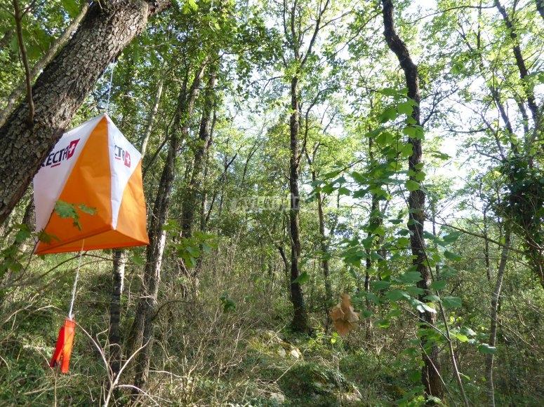 Objetivo ubicado en el bosque