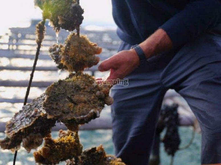Prendendo i molluschi