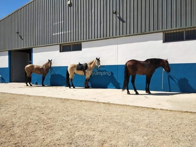 设施中的马匹