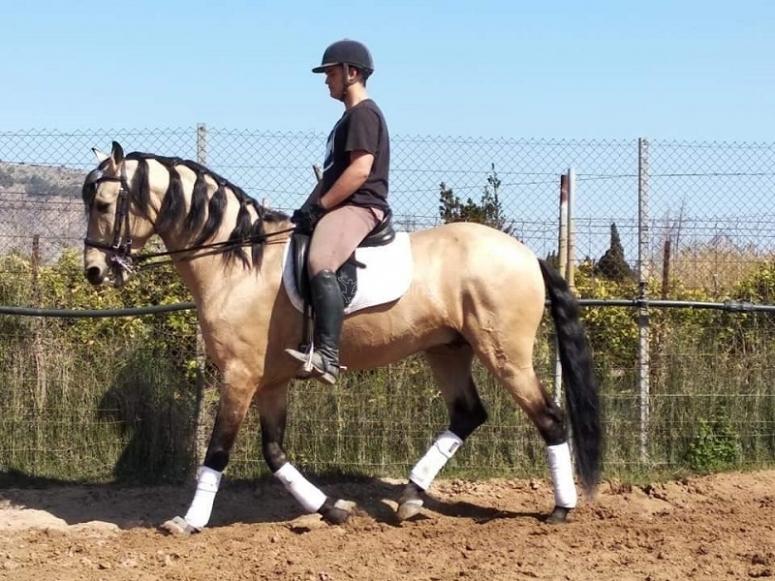 在马匹课上