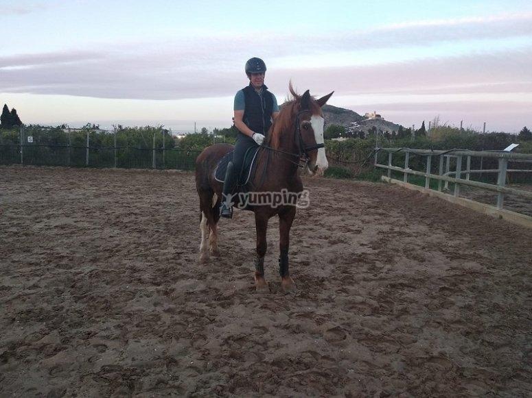 准备学习骑马的所有知识