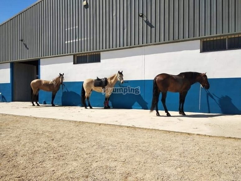 Some of the horses in the sun