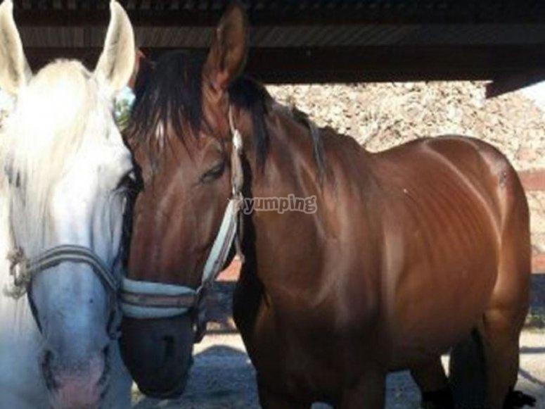 Los caballos de nuestro centro