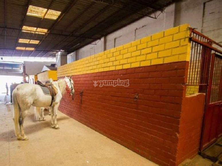 The horse in the facilities